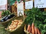 Legumele cooperativei ''Lunca Somesului Mic'', cerute pe piata Clujului