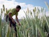 Cultivatorii de aloe vera ecologica