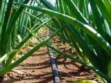 Sisteme de irigatii eficiente in agricultura ecologica